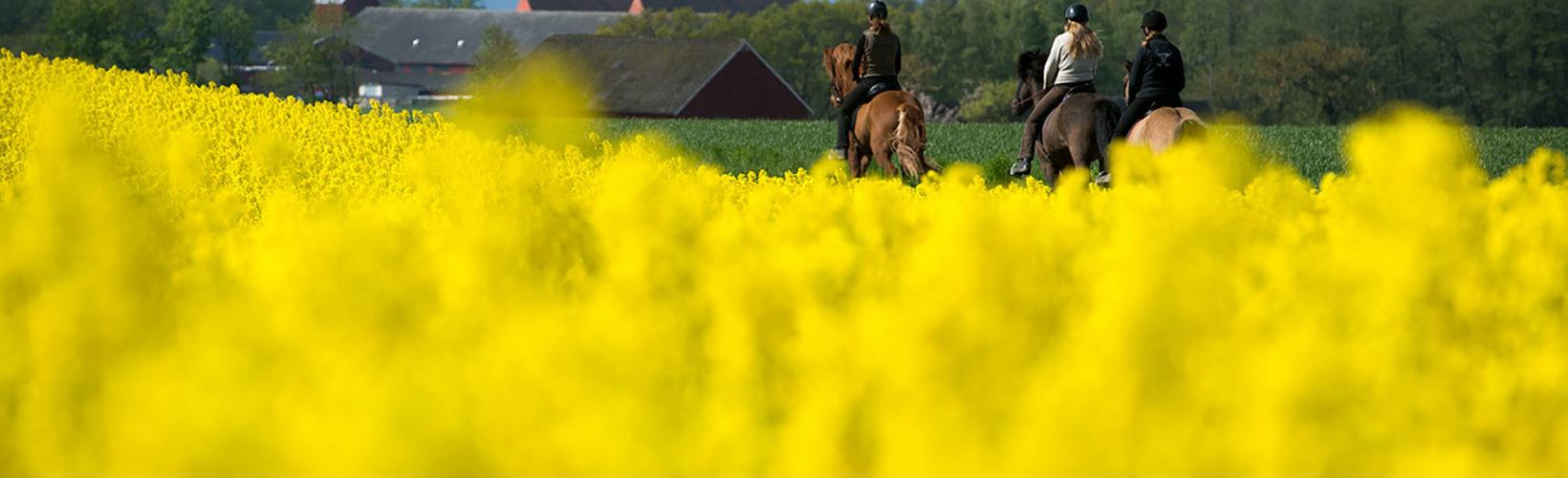 Horseback ridning