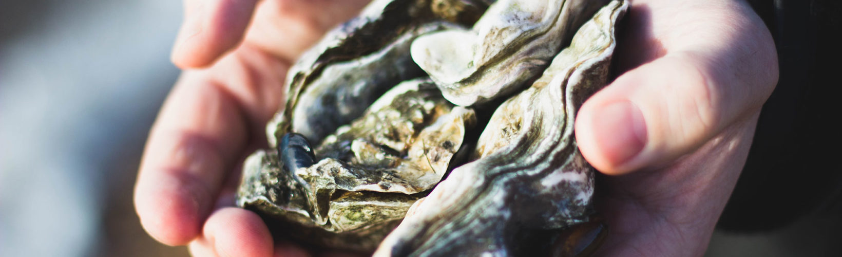 Oyster safari at the Wadden Sea National Park