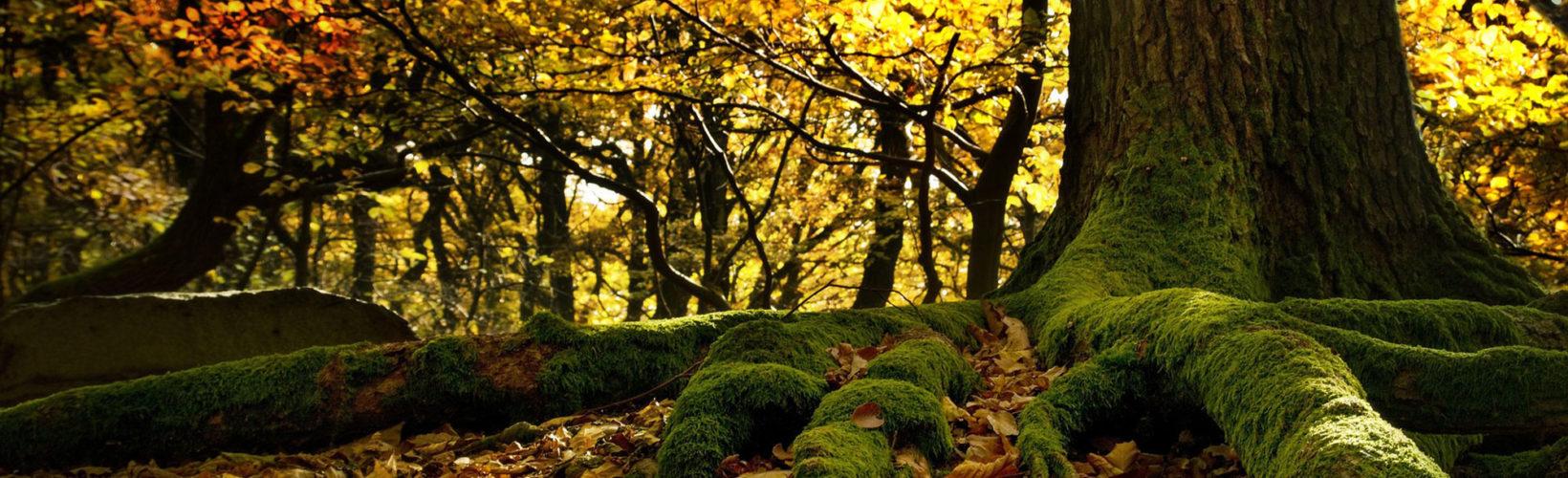 Åkulla beech forest