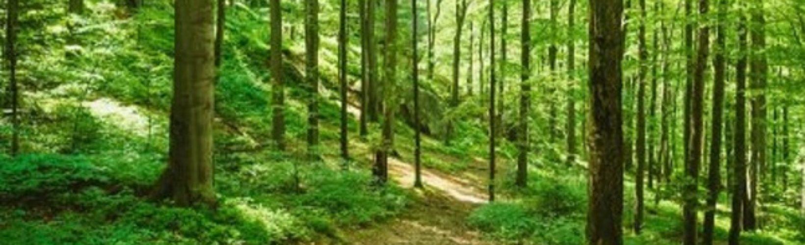 Rydsskogen