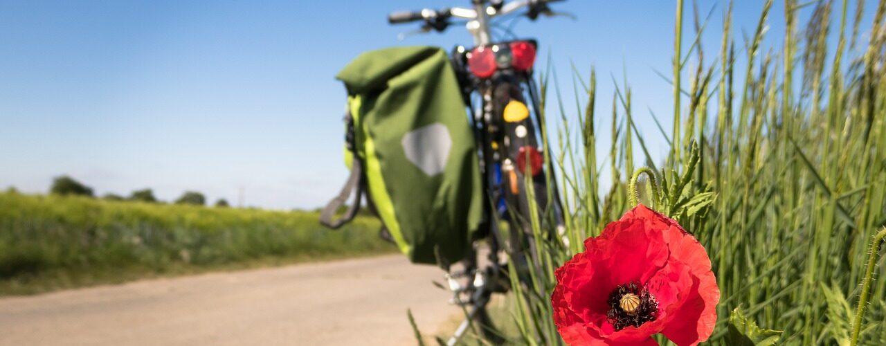 Cykla på norra Öland