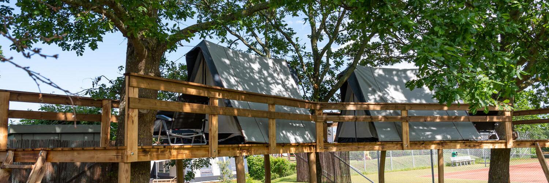 Trætop telt